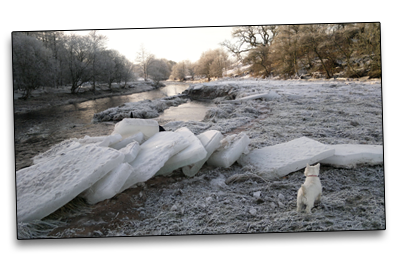Walking dogs in the depths of winter, Maisie the West Highland Terrier doesn't know what to make of the ice flows on the River Endrick